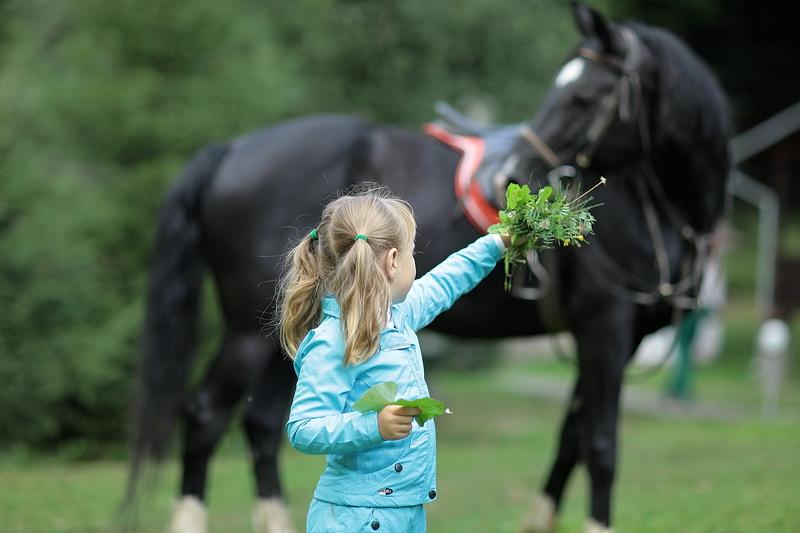 Конные прогулки и уроки верховой езды